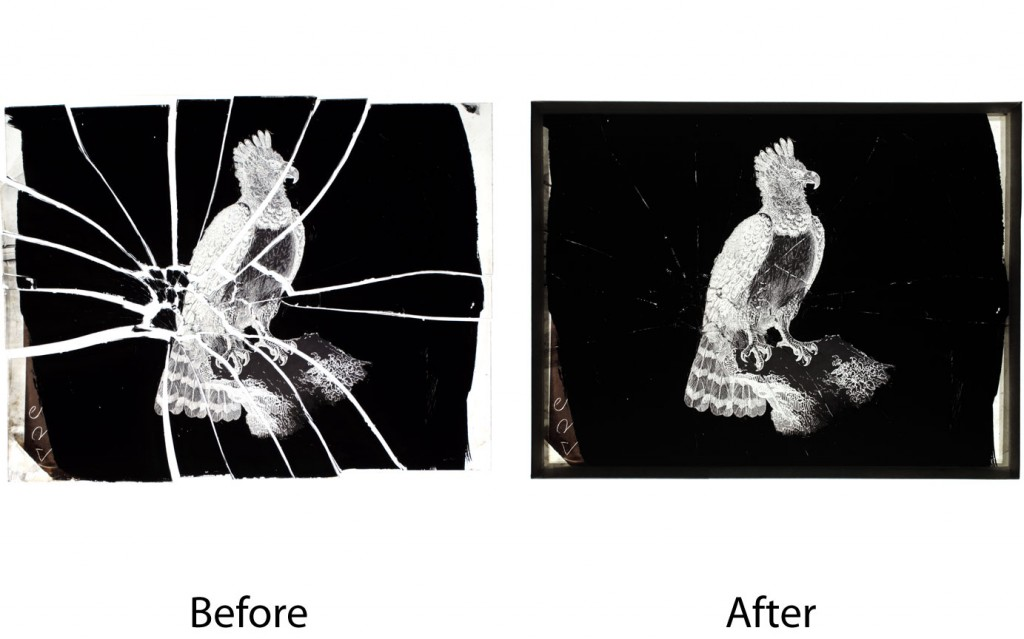 Repair of broken glass plate negative